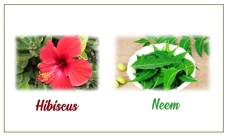 Neem and Hibiscus