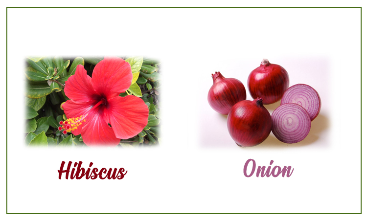 Onion and hibiscus