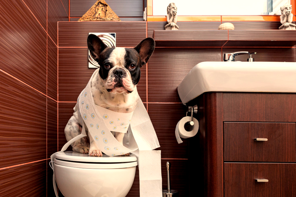 Potty Training Dogs