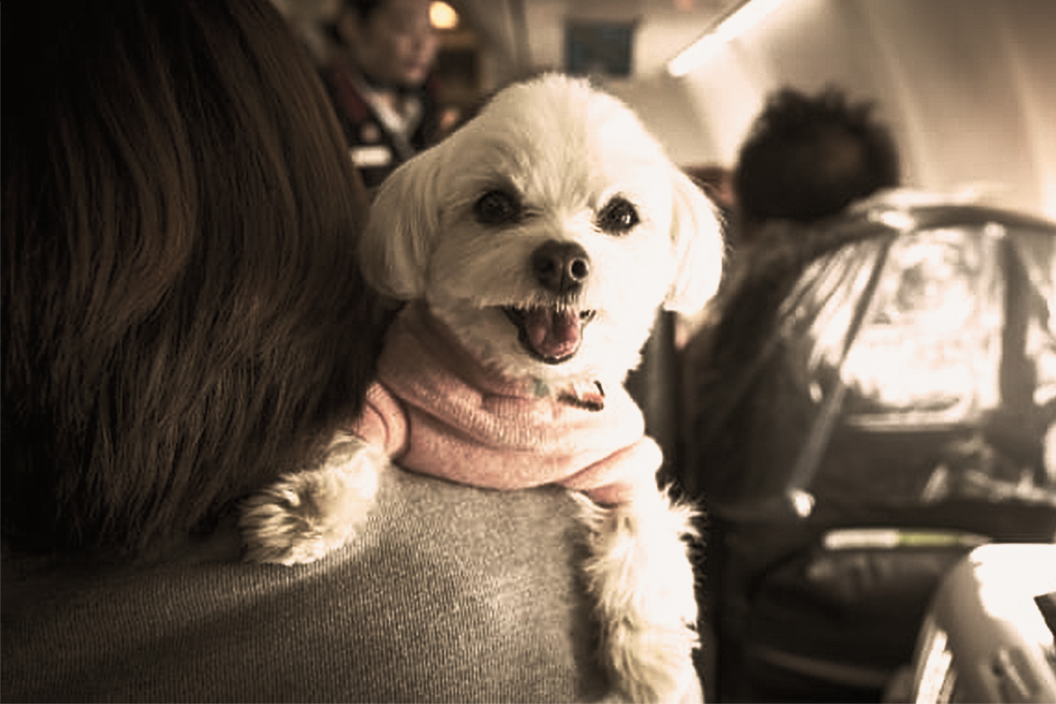 Pet In The Flight