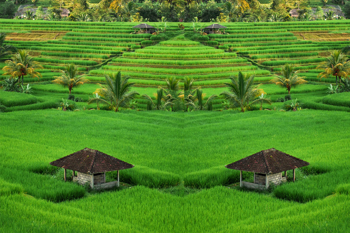 Green Color Of Nature - WomensByte