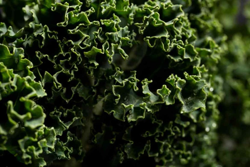 Kale Spinach