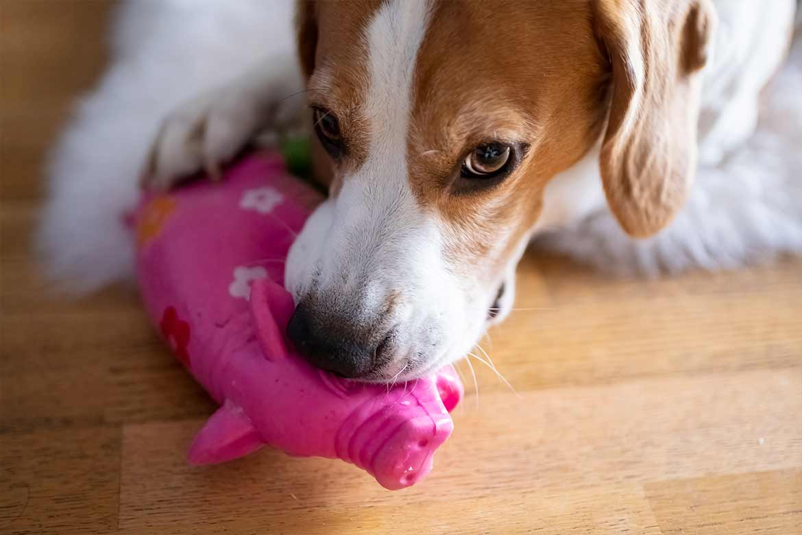 dogs like squeaky toys