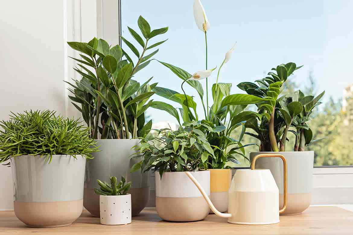 9 things every healthy home ought to have
